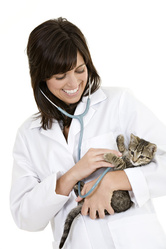 creation-site-internet-veterinaire